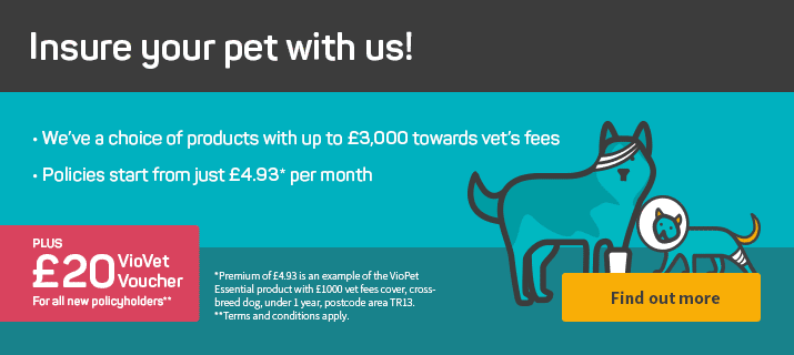 VioVet Insurance - Insure your pet with us!