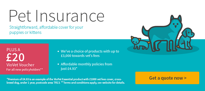 Insurance from VioVet