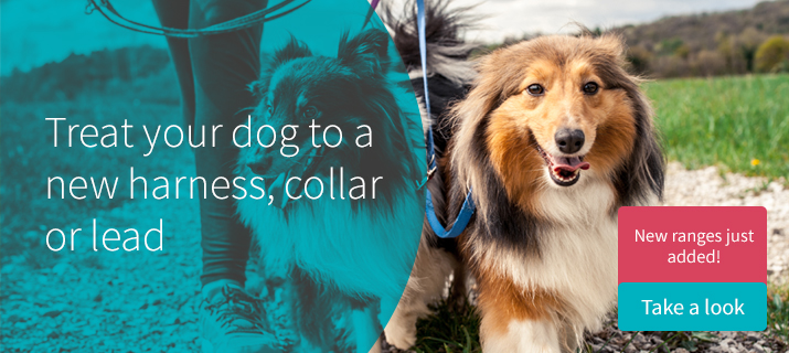 Treat your dog to a new harness, collar or lead