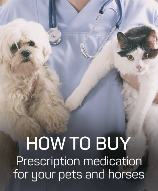 How to buy prescription medication for your pets