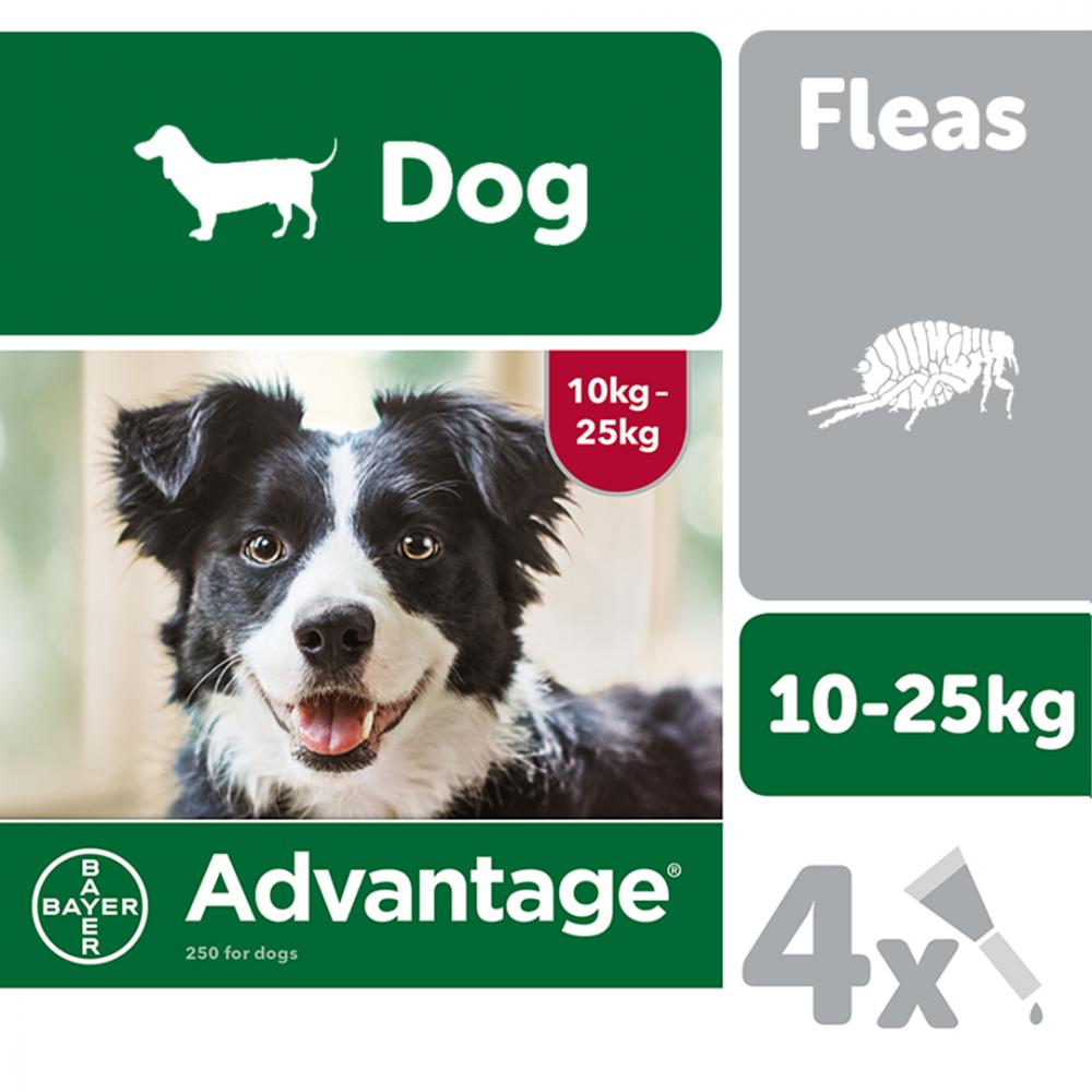 Advantage 250 Spot On Flea Control Large Dog