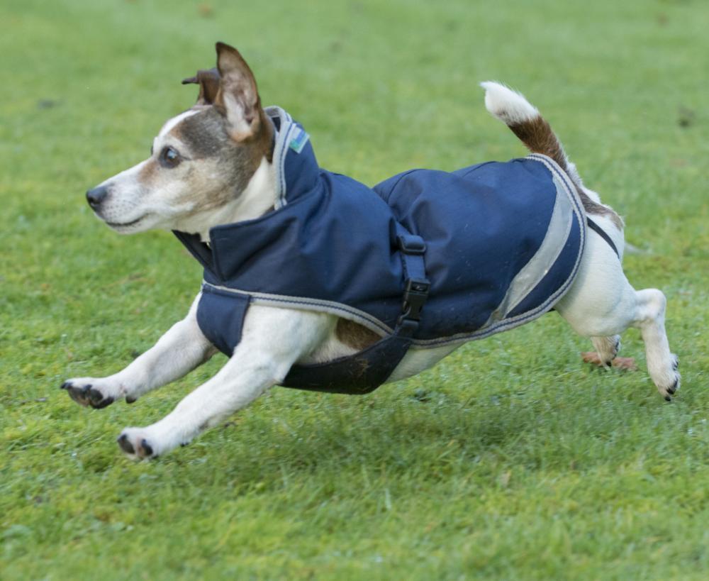 Bucas Freedom Dog Rug