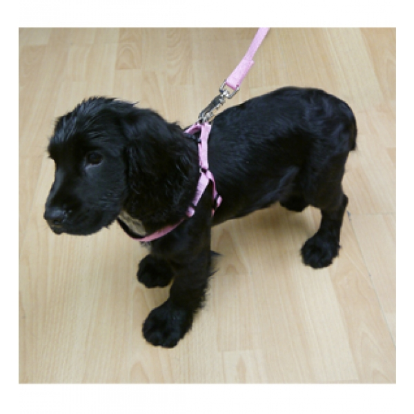 Classic Soft Protection Harness for Dogs