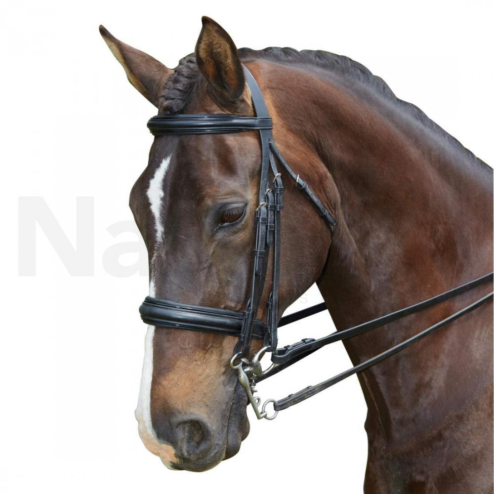 Collegiate Padded Headpiece Raised Weymouth Bridle