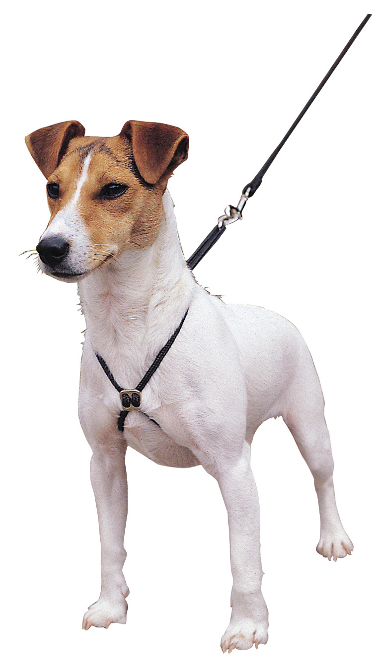 Company Of Animals Lupi Dog Harness