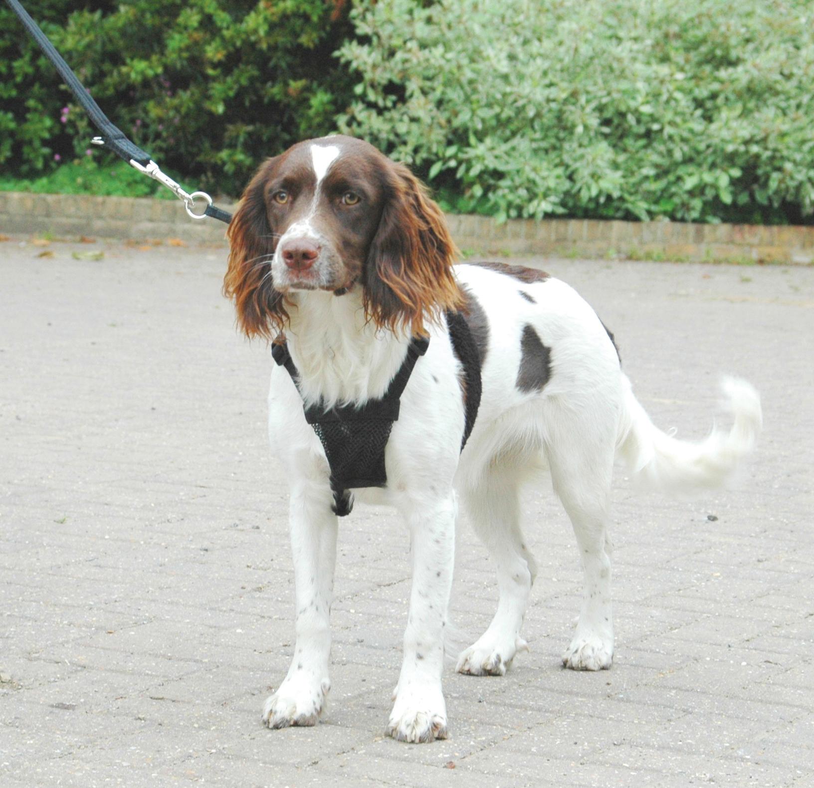Company Of Animals Non Pull Dog Harness