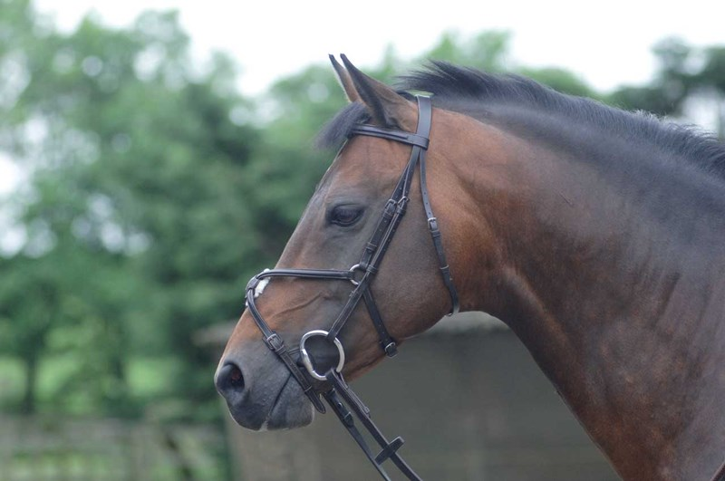 Cottage Craft Westminster Bridle