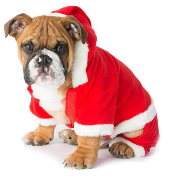 House of Paws Christmas Onesie
