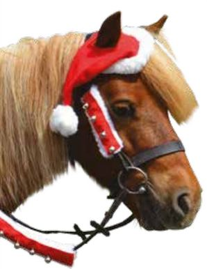 Christmas Horse Pictures.Hy Christmas Santa Horse Hat