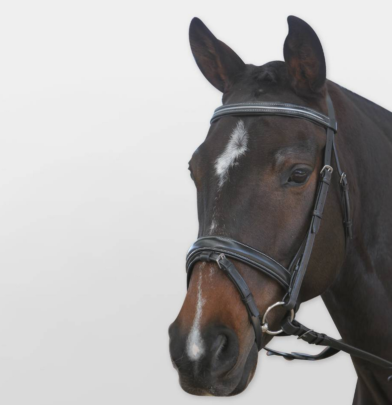 Kincade Dressage Bridle