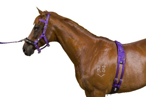 Kincade Equigrip 4 Piece Lunge Kit