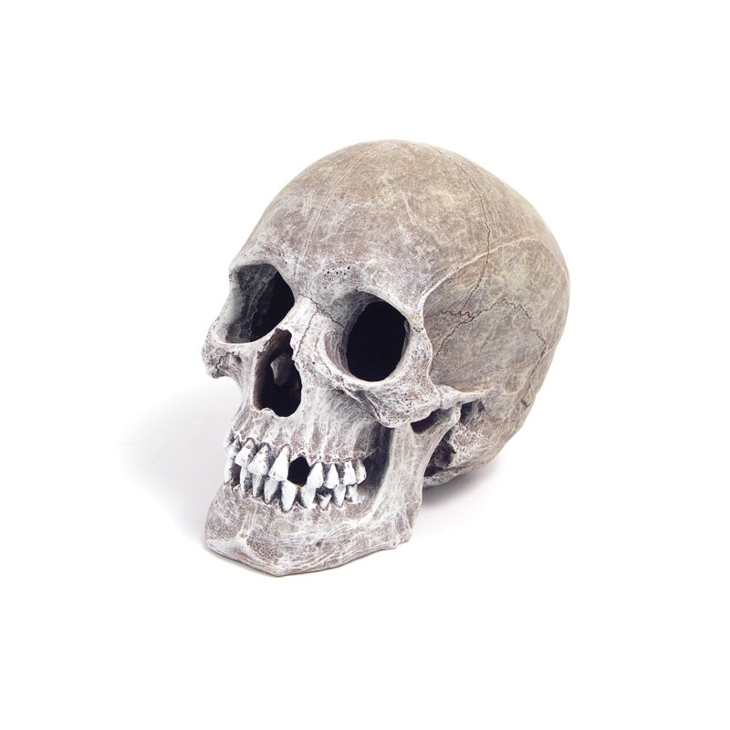 Rosewood Blue Ribbon Life-Like Human Skull for Aquariums