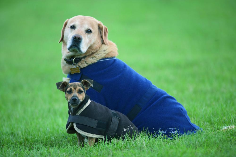 Mark Todd Fleece Dog Coat