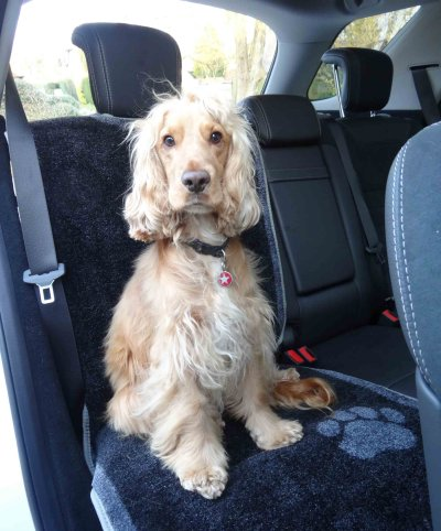 Pet Rebellion Car Seat Carpet for Dogs