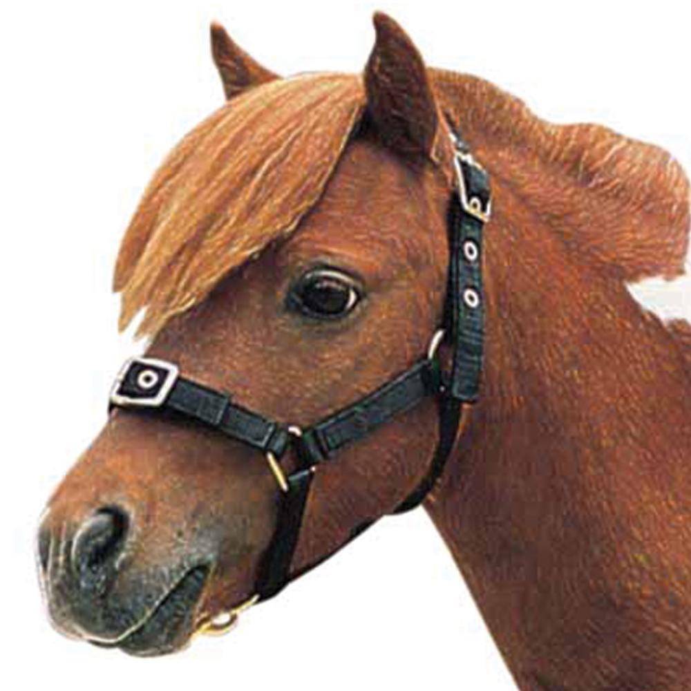 Roma Nylon Headcollar Mini