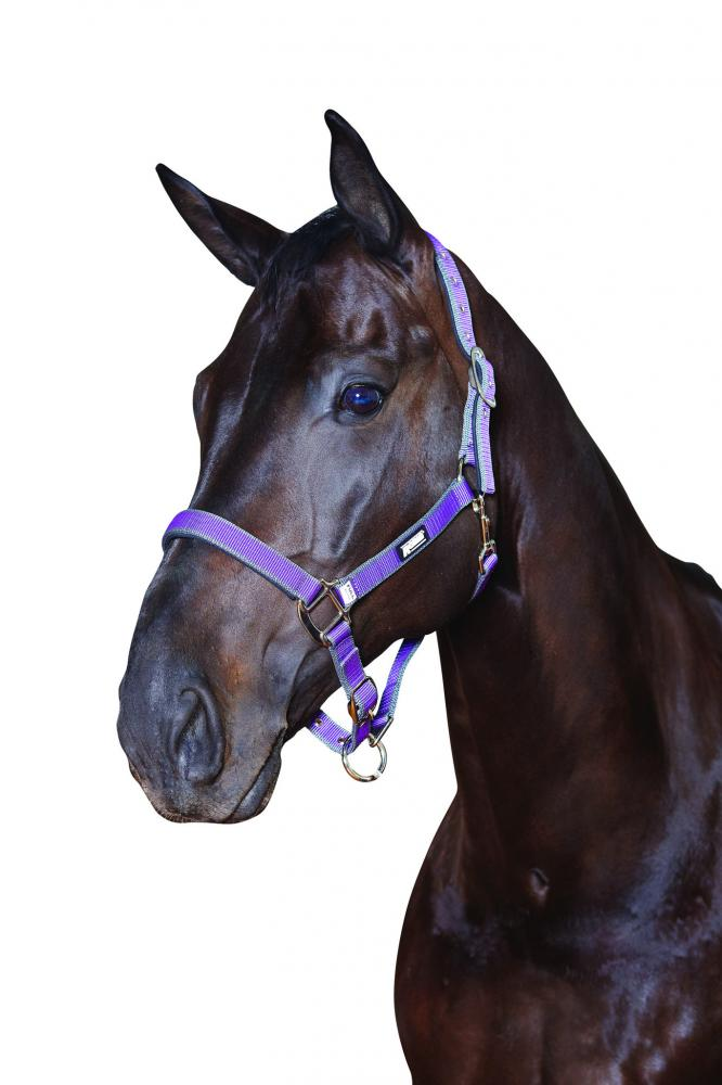 Roma Nylon Headcollar With Neoprene Lining