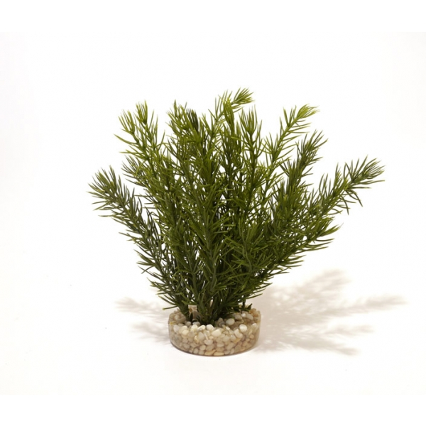 Sydeco Natural Club Moss Aquarium Plant