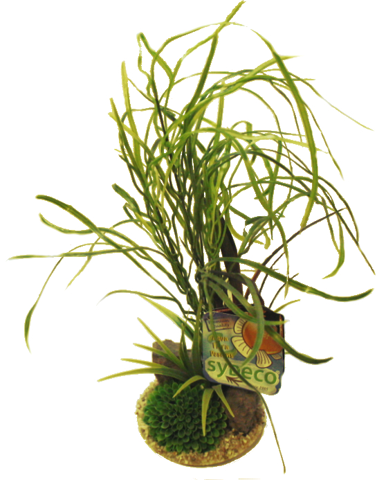 Sydeco Lily Grass Aquarium Plant With Rocks
