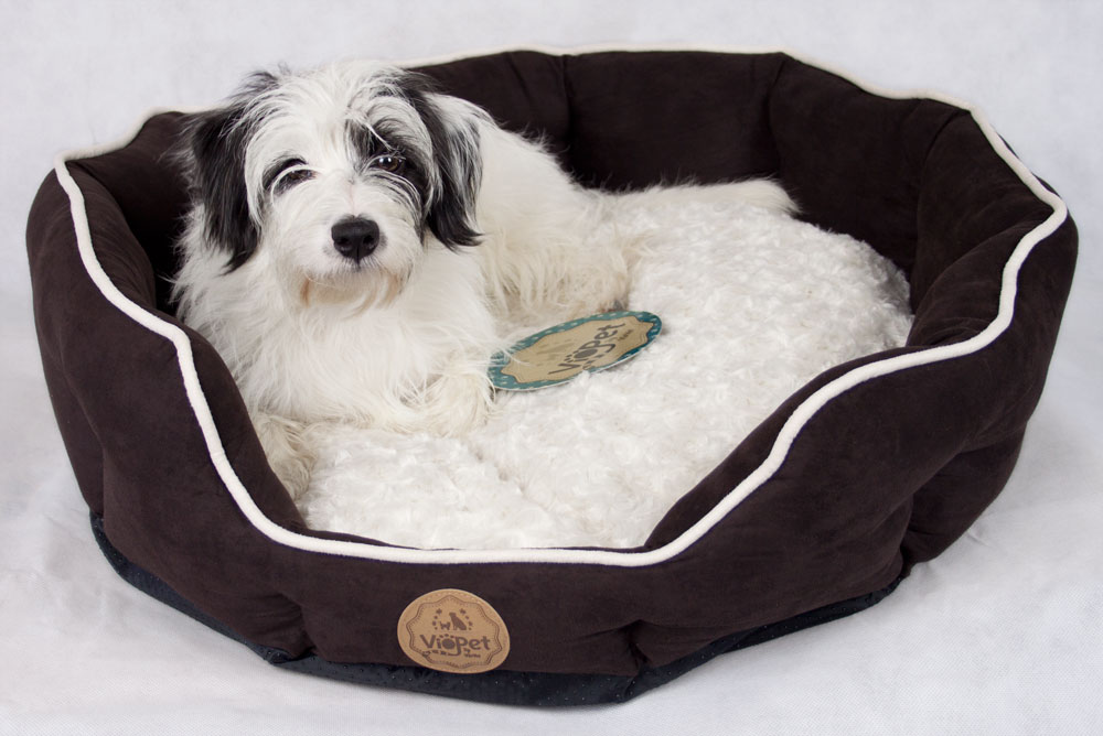 VioPet Ziggy's Zzz Dog Bed