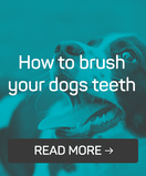 feb brush dogs teeth