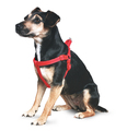 Ancol Padded Harness for Dogs