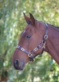Blenheim Pink/Natural/Navy Leather Polo Headcollar