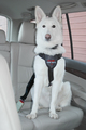 CLIX Car Safe Harness for Dogs