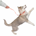 CLIX House Line Indoor Training Dog Lead