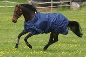 Mark Todd Lightweight Turnout Rug