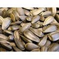 Willsbridge Sunflower Seeds
