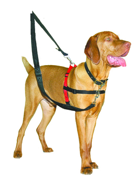 Halti Black & Red Front Control Dog Harness