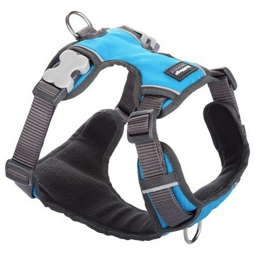 Red Dingo Turquoise Padded Dog Harness
