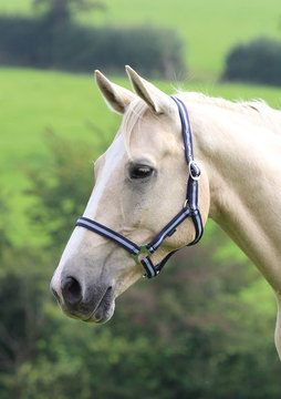 Shires Wessex Navy/Silver Headcollar