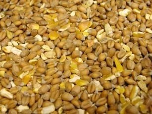 Willsbridge Mixed Corn Poultry Feed