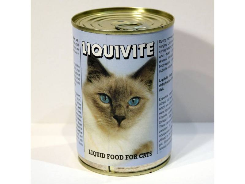 liquid diet for old cats