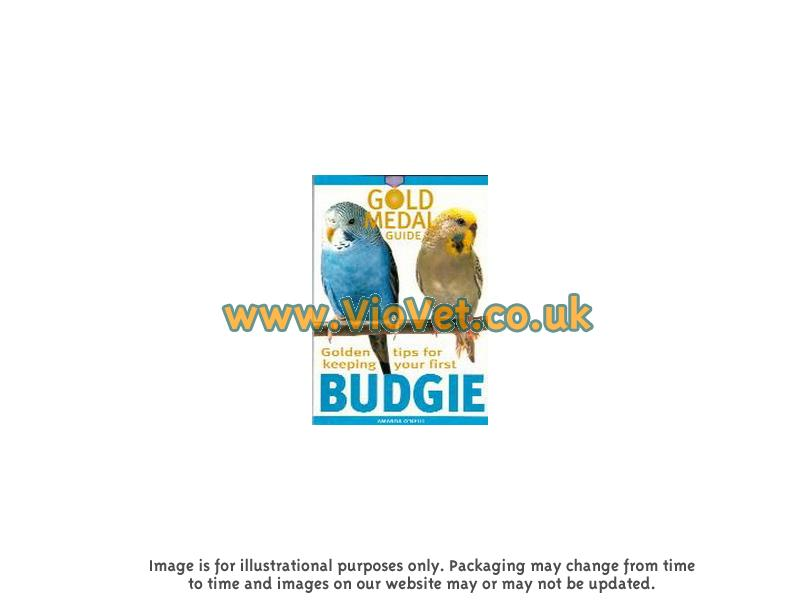 Golden Tips For Keeping Your First Budgie