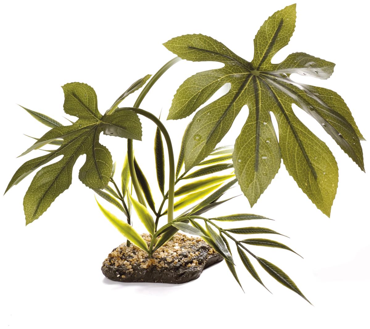Komodo canopy plants - Plante jungle ...