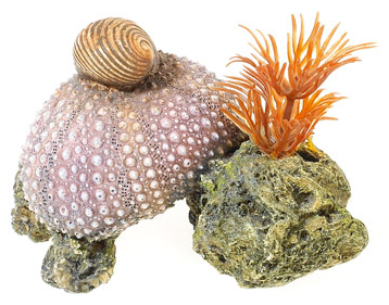 Sea Shell On Rocks With Plants » 8cm