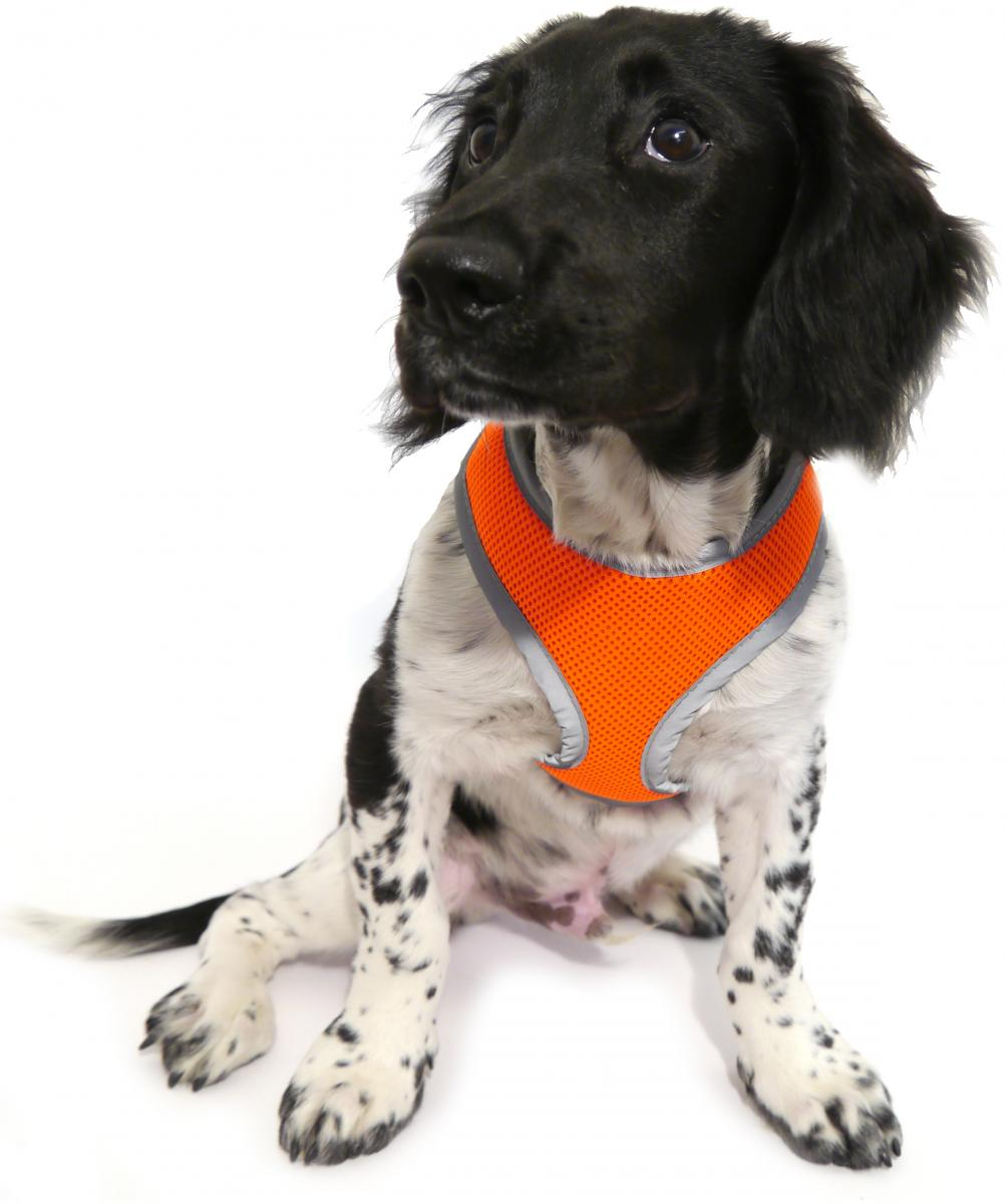 Reflective Orange Padded Harness » Medium