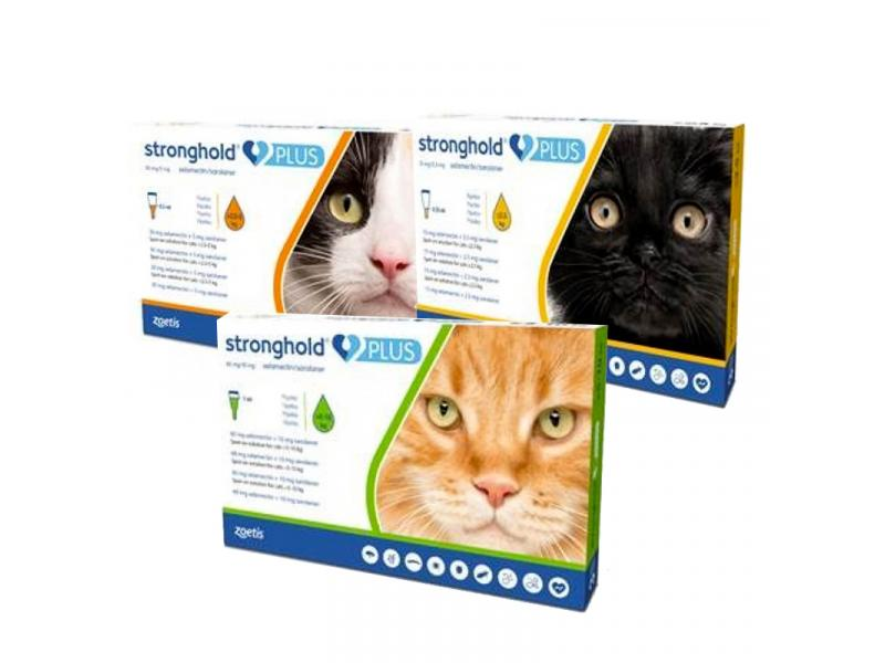 Kitten/Small Cat » Pack of 3